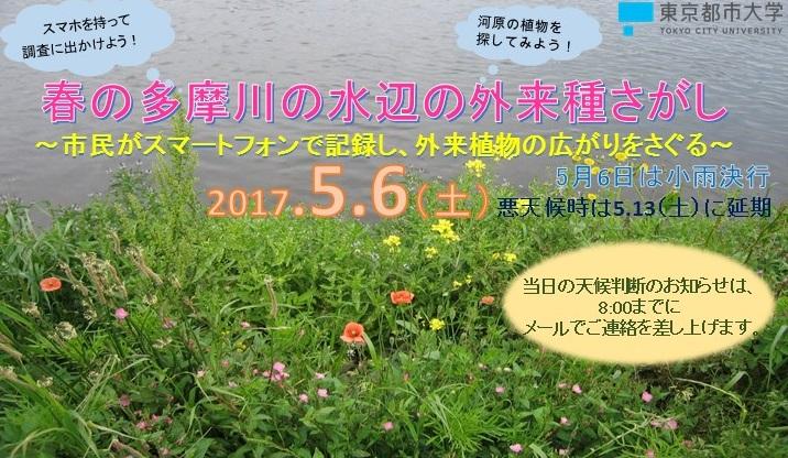 春の多摩川の水辺の外来種さがし~市民がスマートフォンで記録し、外来植物の広がりをさぐる~