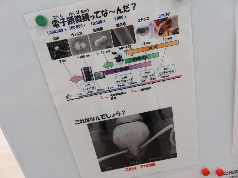 トークショー「ミクロの発見~電子顕微鏡で見る生き物の秘密」(7/25.28)