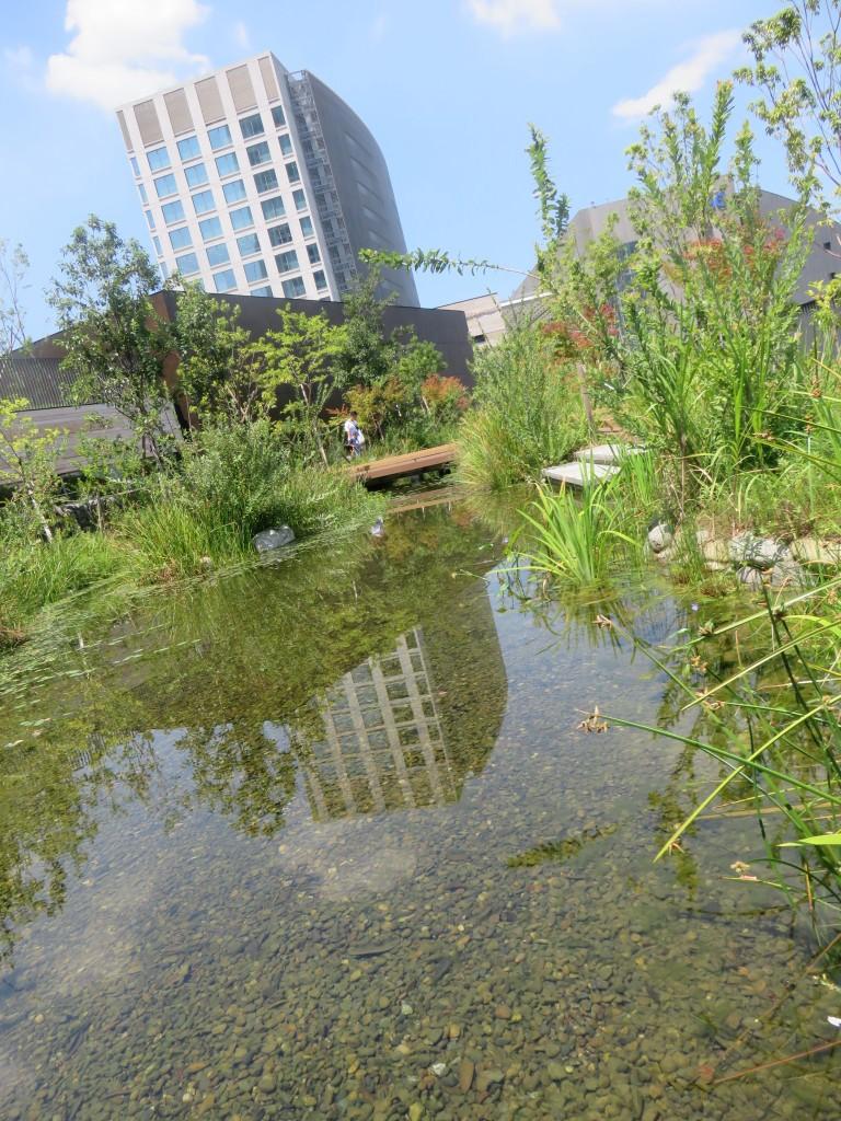 二子玉川ライズ屋上のビオトープ めだか池の水質を調べてみよう